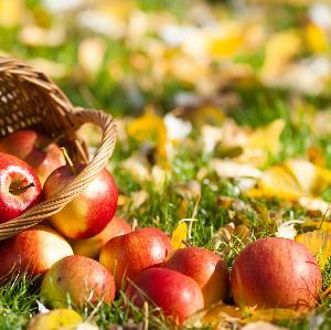 Przepis na cydr: jak zrobić domowy cydr jabłkowy?