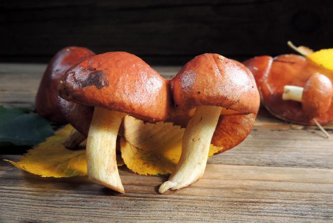 Świeże grzyby: jak przechowywać? Co zrobić ze świeżych grzybów?